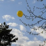 Arty 'balloon-in-a-tree' shot